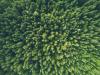 Kuvassa metsä ylhäältäpäin kuvattuna.  Ympäristöjohtamisen asiantuntijapalveluiden tarkoituksena on varmistaa, että suunnittelussa ja toteutuksessa noudatetaan ympäristöön liittyviä lakeja ja määräyksiä